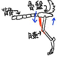変形性ワンちゃん5